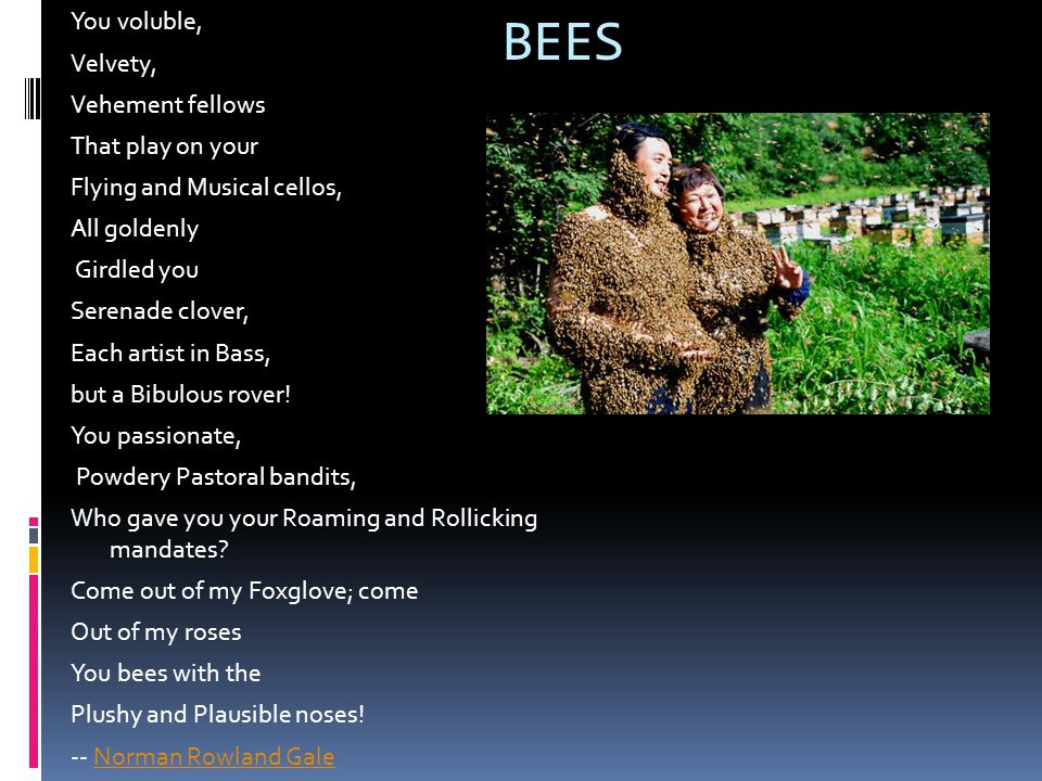 BEES You voluble, Velvety, Vehement fellows That play on your