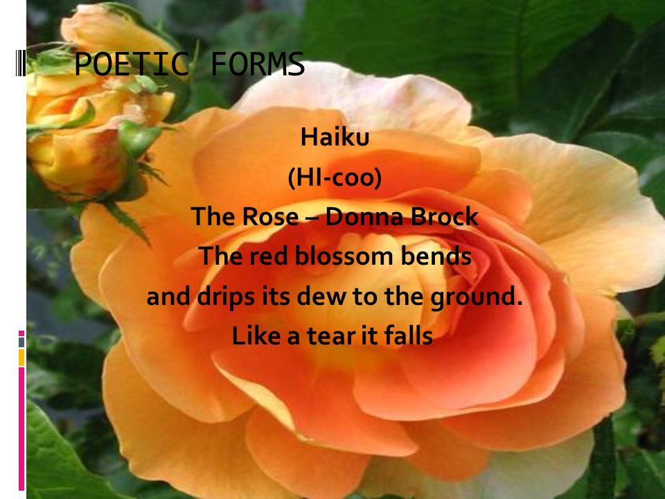 POETIC FORMS Haiku (HI-coo) The Rose – Donna Brock The red blossom bends and drips its dew to the ground.