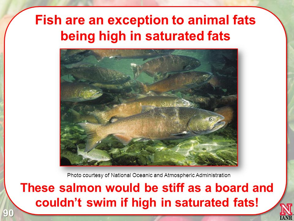Fish are an exception to animal fats being high in saturated fats