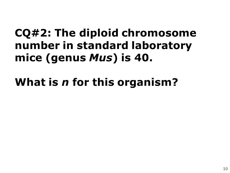 CQ#2: The diploid chromosome number in standard laboratory mice (genus Mus) is 40.