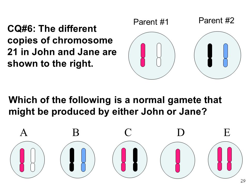 Parent #2 Parent #1. CQ#6: The different copies of chromosome 21 in John and Jane are shown to the right.