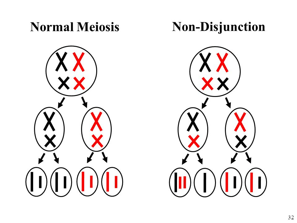 Normal Meiosis Non-Disjunction