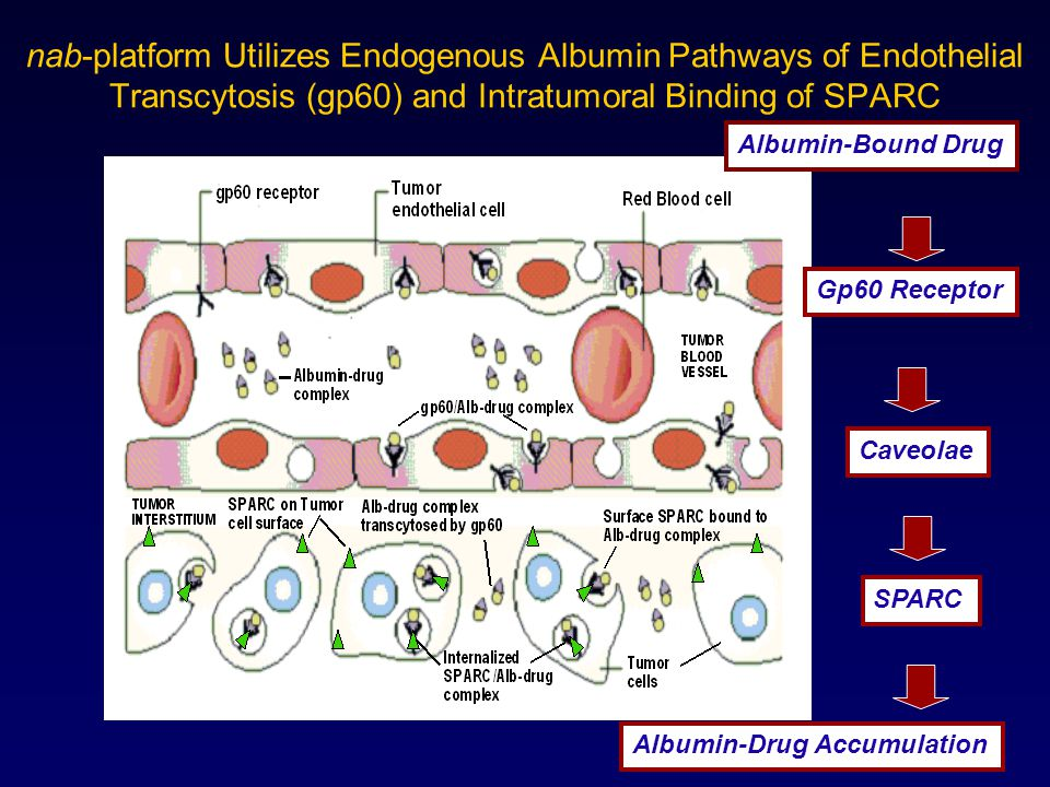 nab-platform Utilizes Endogenous Albumin Pathways of Endothelial Transcytosis (gp60) and Intratumoral Binding of SPARC
