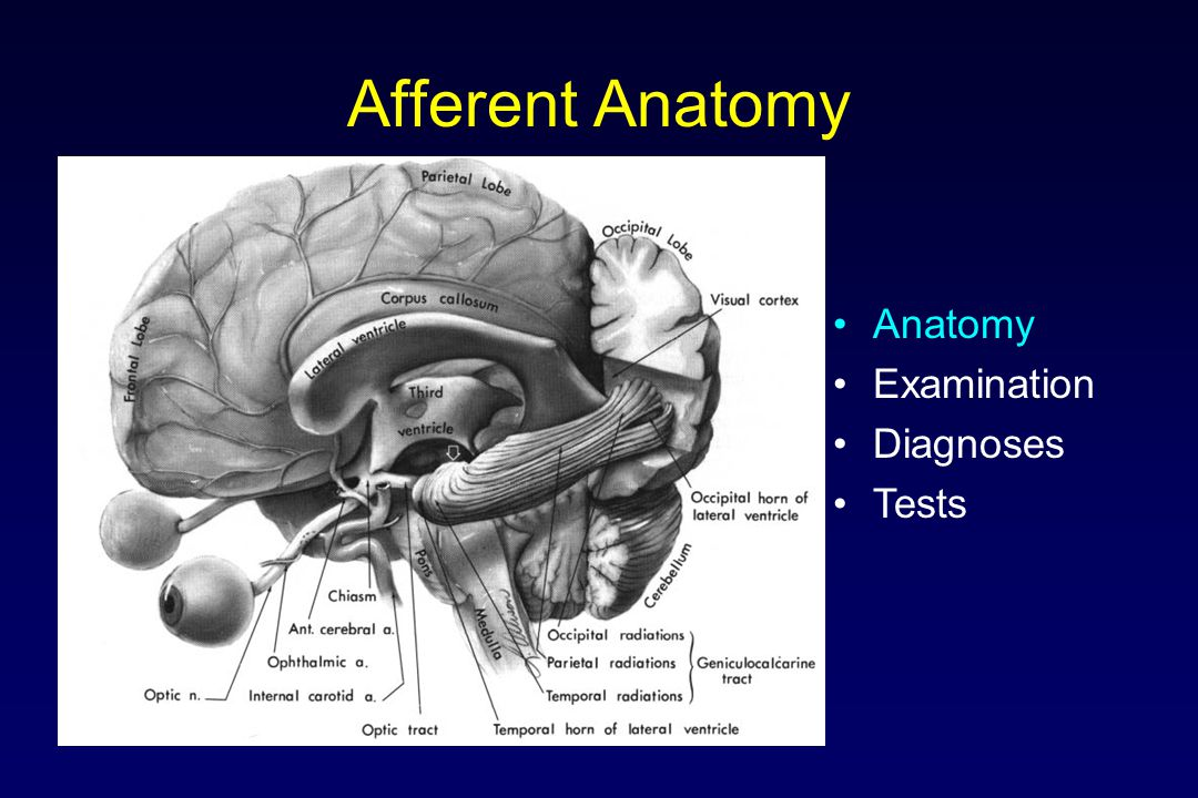 Afferent Anatomy Anatomy Examination Diagnoses Tests