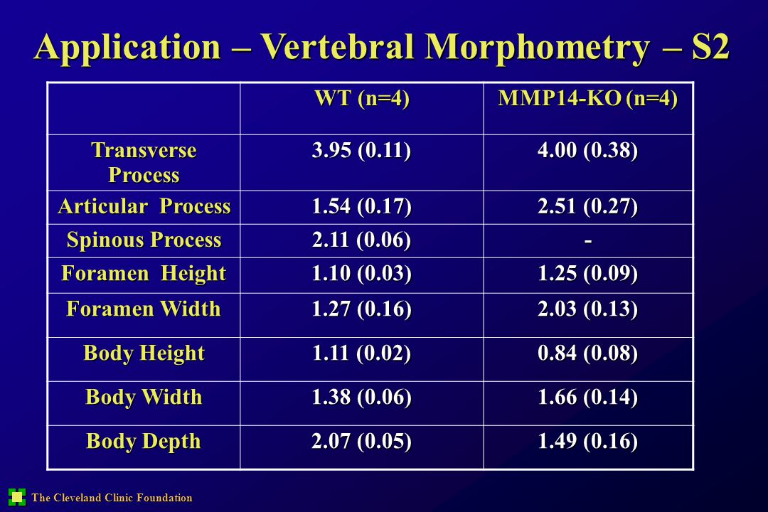 Application – Vertebral Morphometry – S2