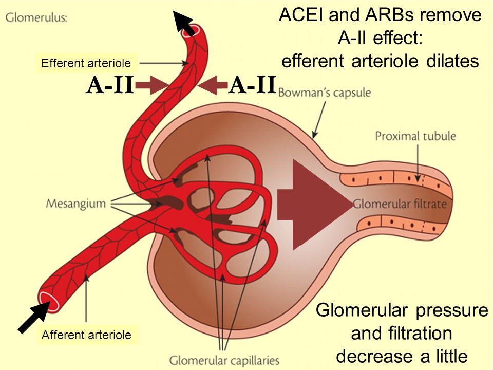 activity 2 effect of pressure on glomerular filtration Blood pressure/kidneys question  this lowers the hydrostatic blood pressure which has a net effect to decrease gfr  glomerular filtration &#8211.