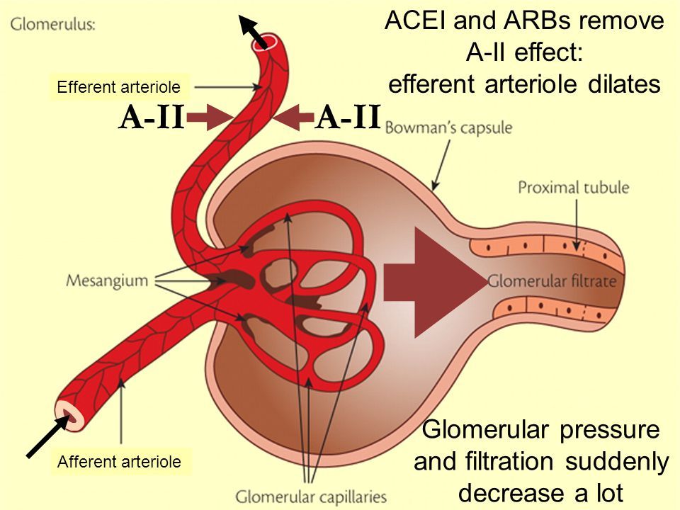 A-II ACEI and ARBs remove A-II effect: efferent arteriole dilates