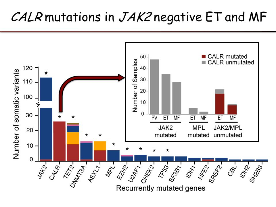 CALR mutations in JAK2 negative ET and MF
