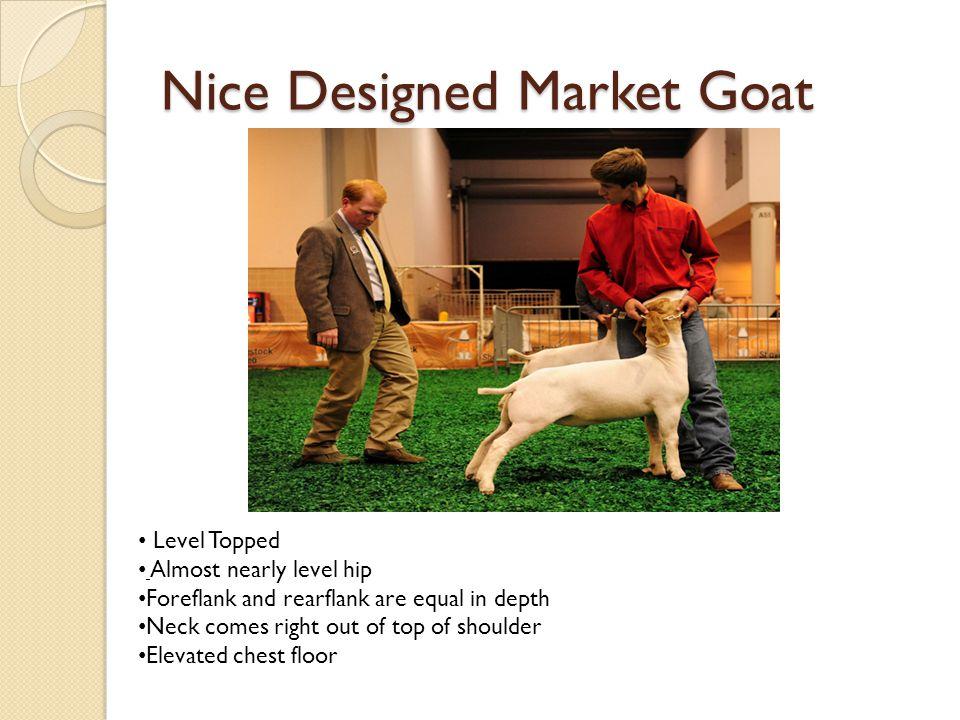 Nice Designed Market Goat