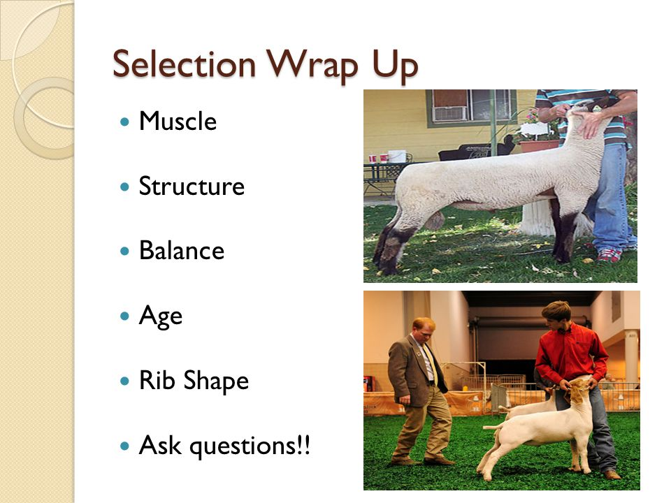 Selection Wrap Up Muscle Structure Balance Age Rib Shape