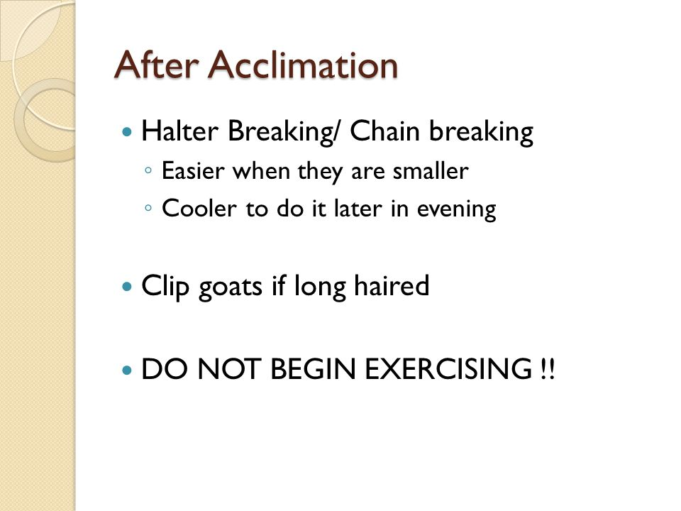 After Acclimation Halter Breaking/ Chain breaking
