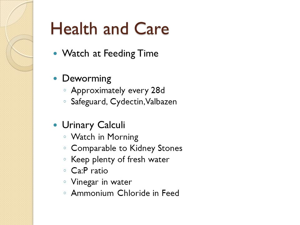 Health and Care Watch at Feeding Time Deworming Urinary Calculi