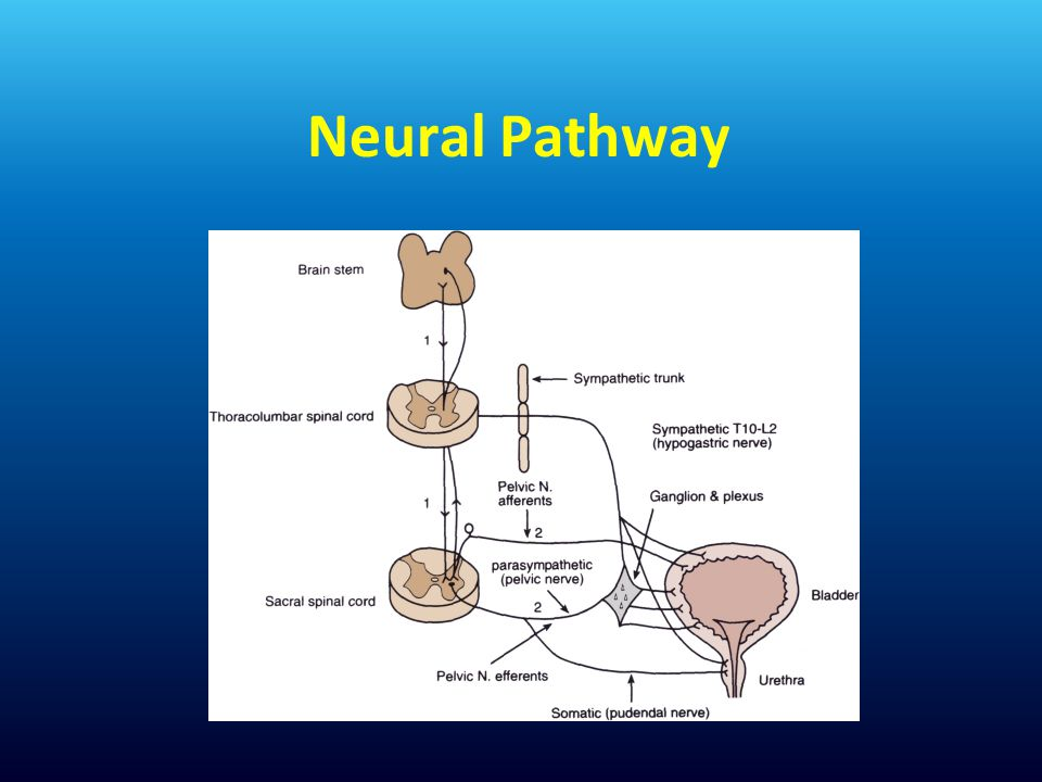 Neural Pathway