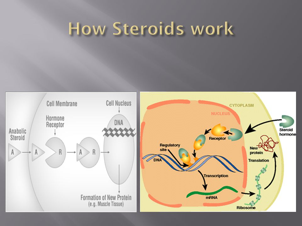 How Steroids work