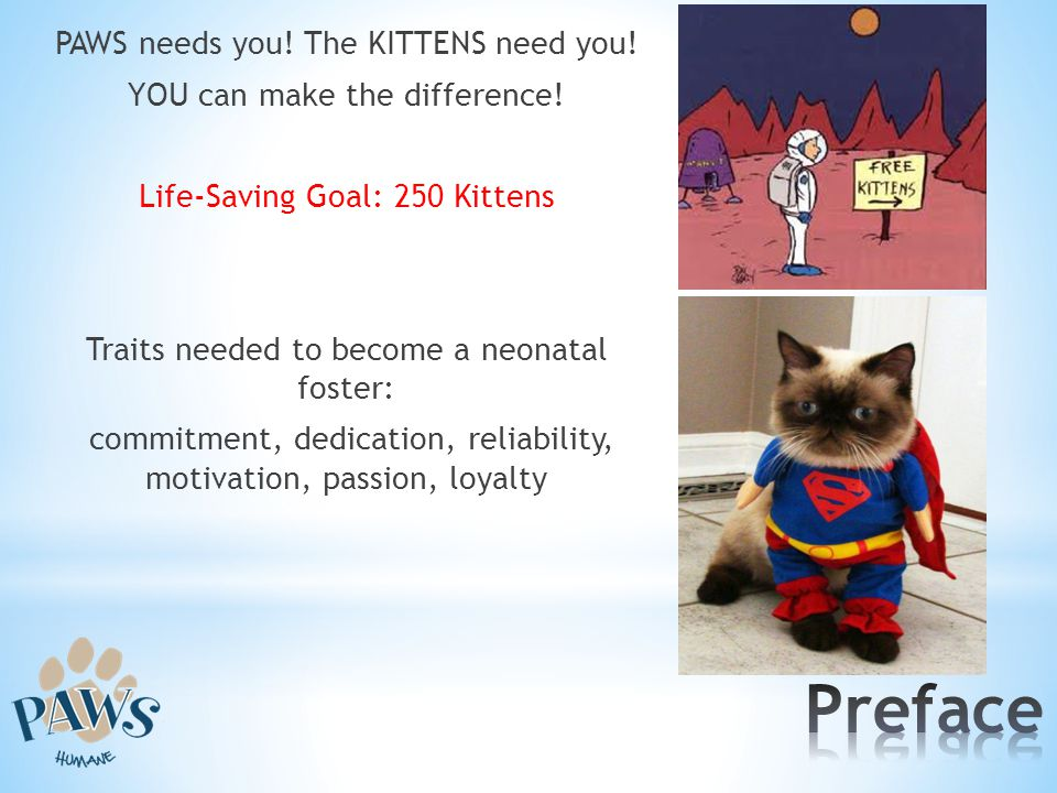 PAWS needs you. The KITTENS need you. YOU can make the difference