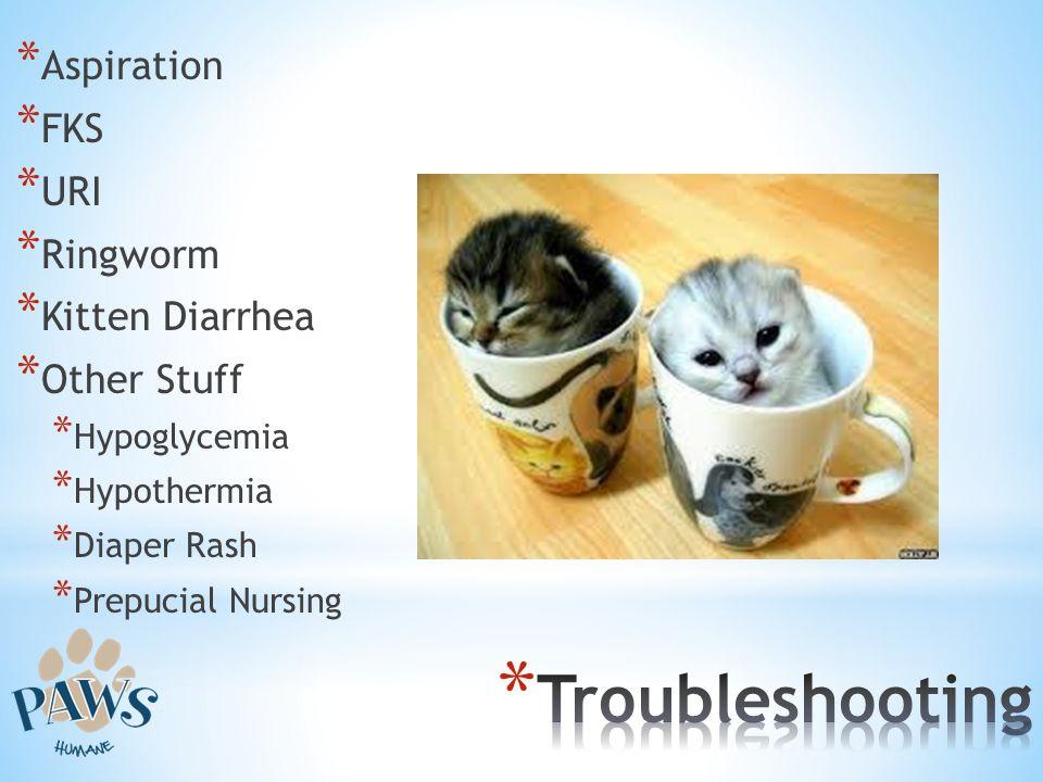 Troubleshooting Aspiration FKS URI Ringworm Kitten Diarrhea
