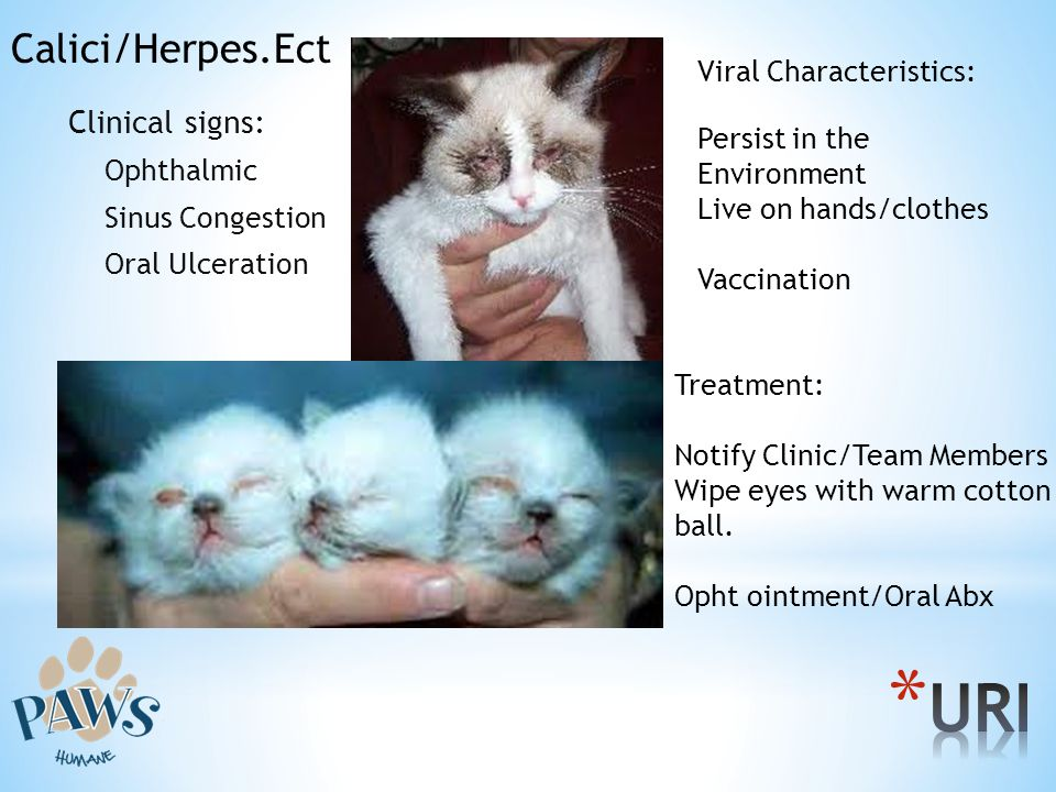 URI Calici/Herpes.Ect Clinical signs: Viral Characteristics: