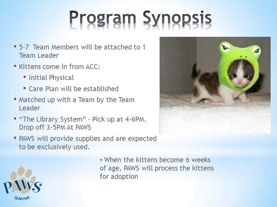 Program Synopsis 5-7 Team Members will be attached to 1 Team Leader