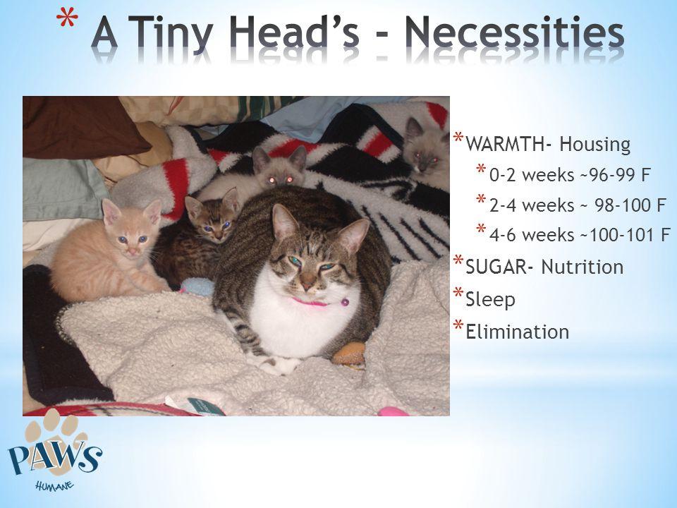 A Tiny Head's - Necessities