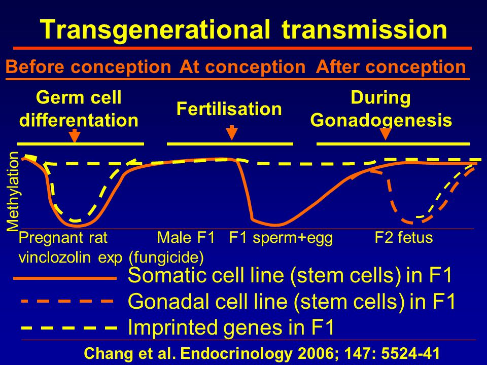 Transgenerational transmission