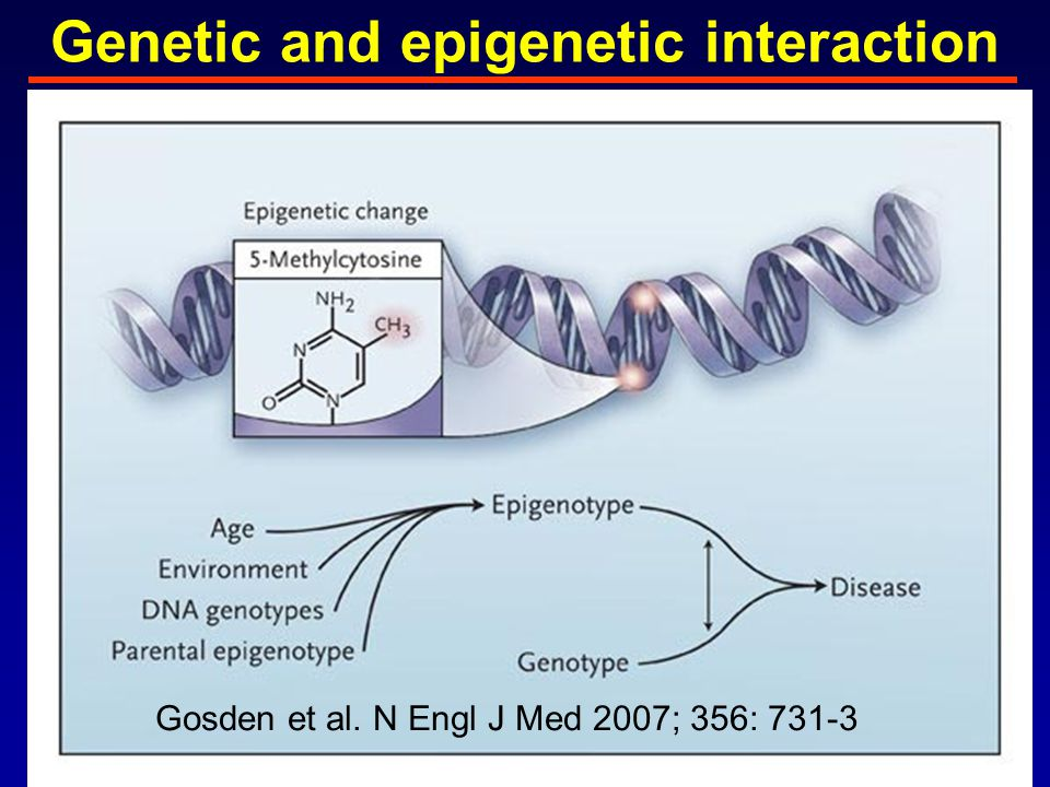 Genetic and epigenetic interaction