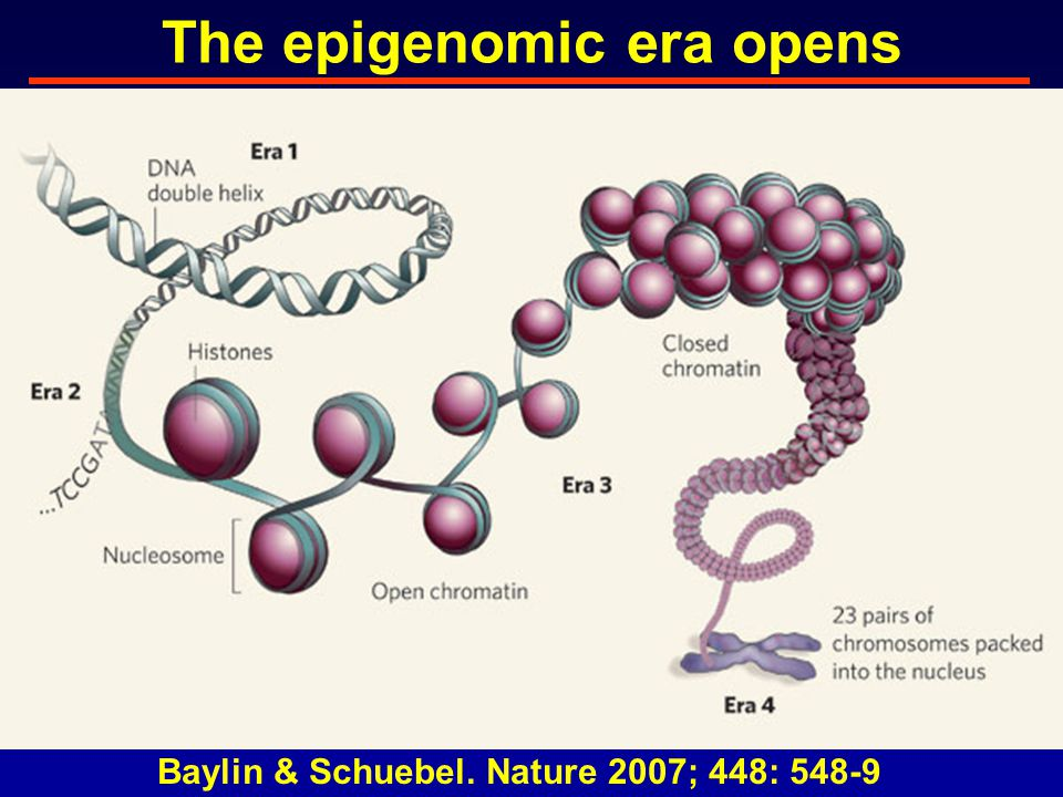 The epigenomic era opens