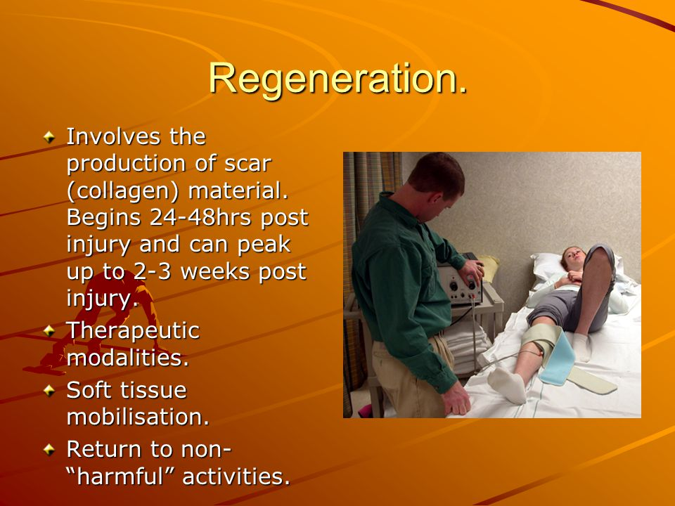 Regeneration. Involves the production of scar (collagen) material. Begins 24-48hrs post injury and can peak up to 2-3 weeks post injury.