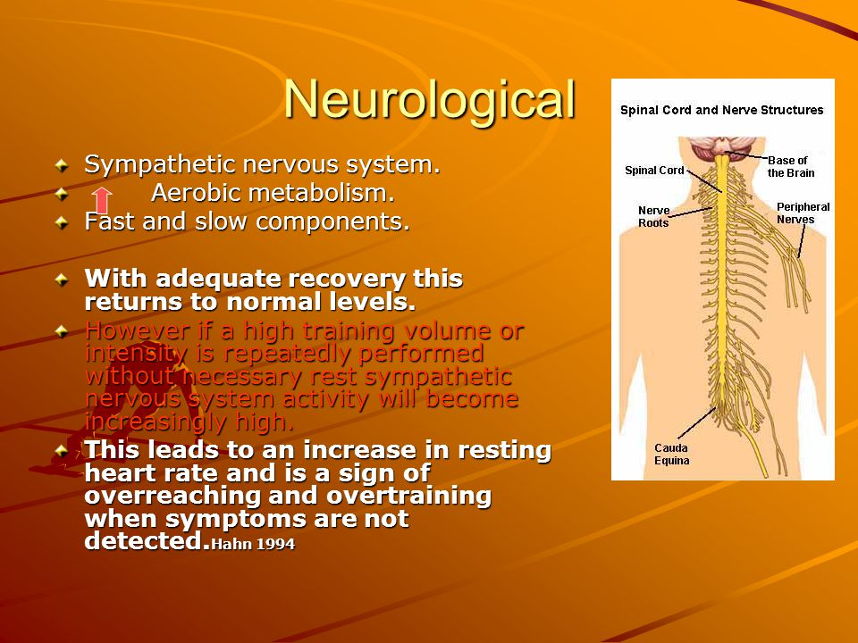 Neurological Sympathetic nervous system. Aerobic metabolism.