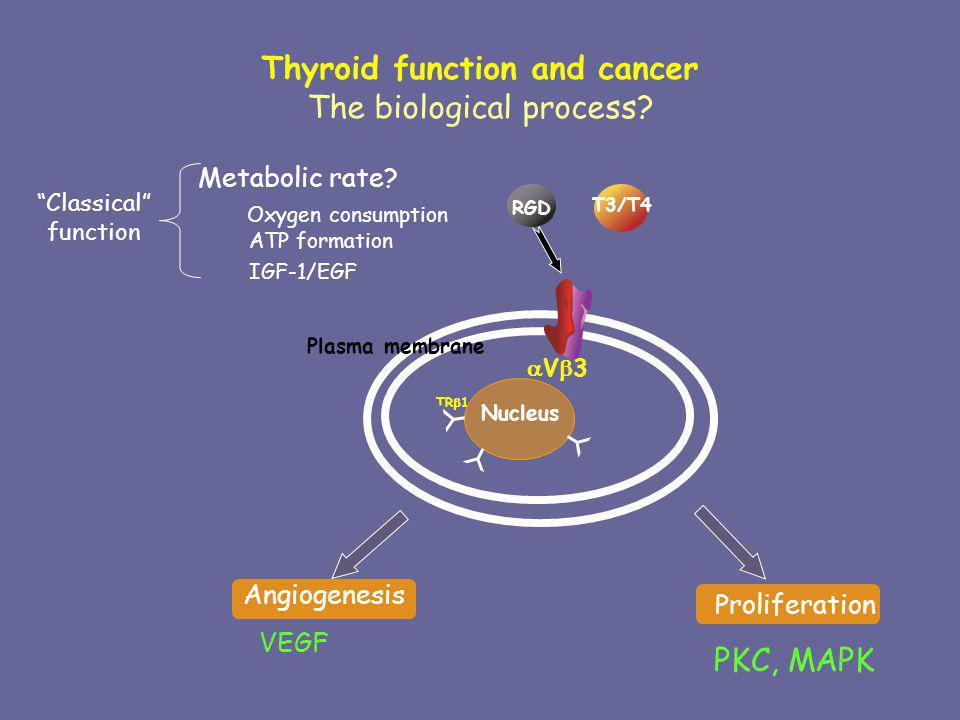 Thyroid function and cancer