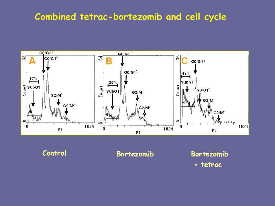 Combined tetrac-bortezomib and cell cycle