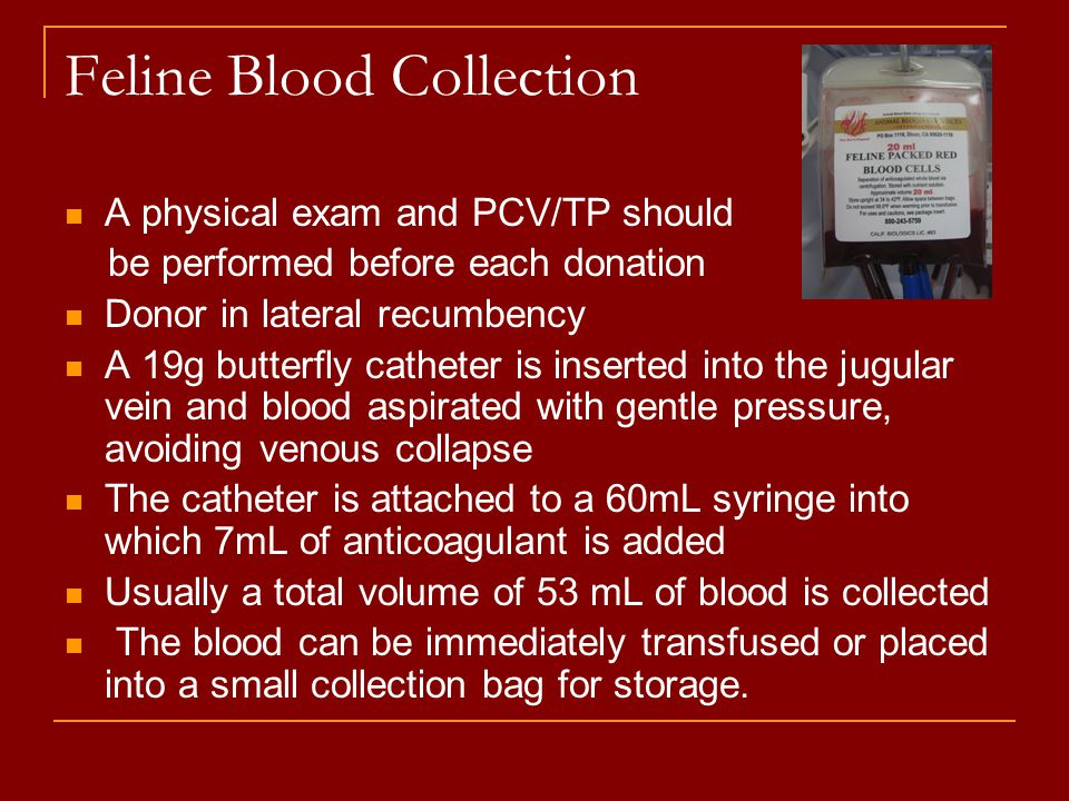 Feline Blood Collection