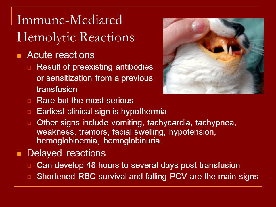 Immune-Mediated Hemolytic Reactions