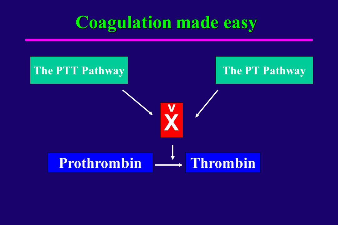 X Coagulation made easy Prothrombin Thrombin The PTT Pathway