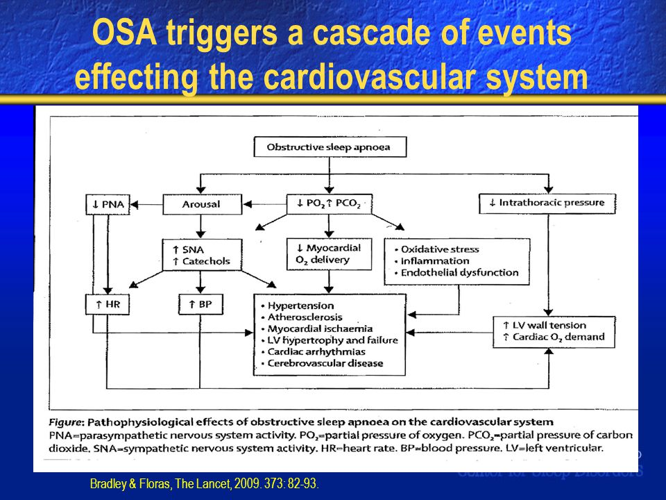 OSA triggers a cascade of events effecting the cardiovascular system