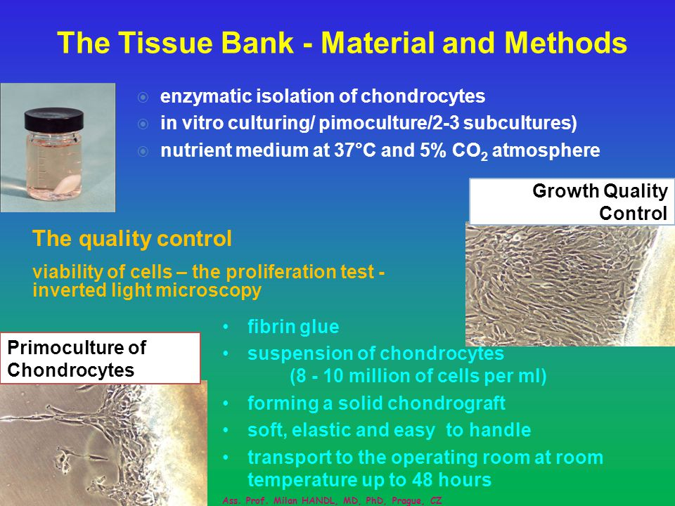The Tissue Bank - Material and Methods