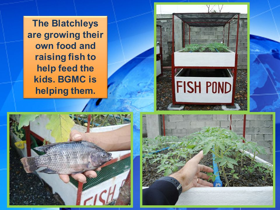 The Blatchleys are growing their own food and raising fish to help feed the kids.