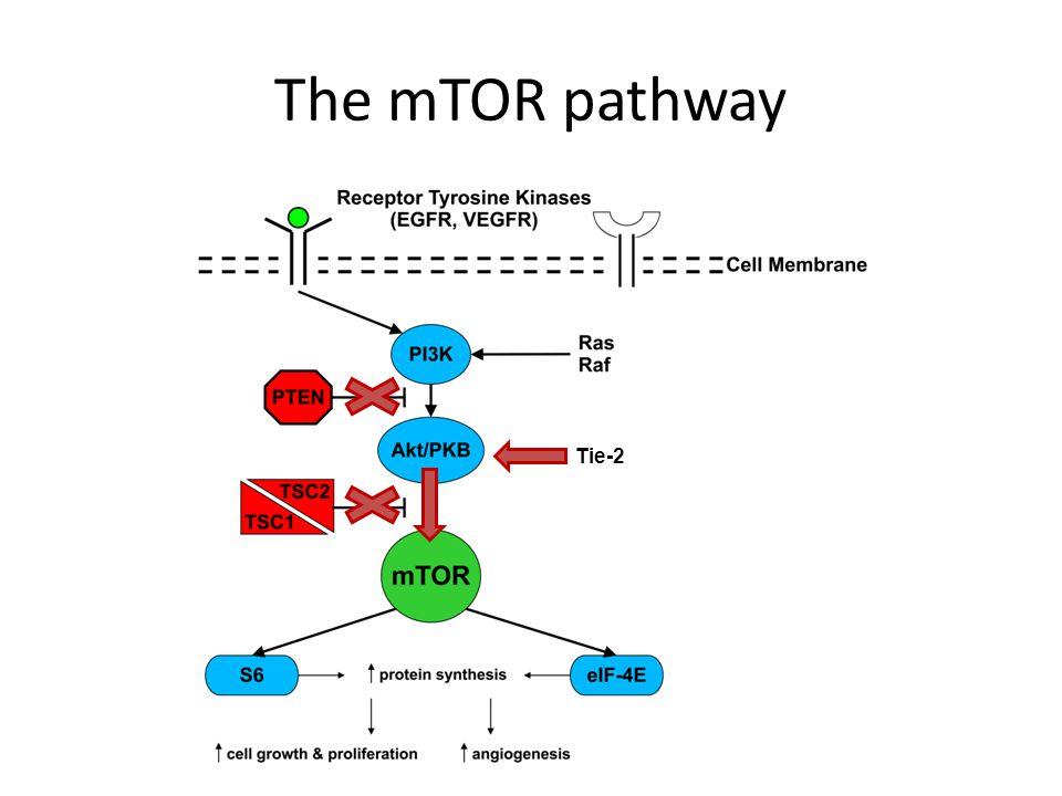 The mTOR pathway Tie-2.
