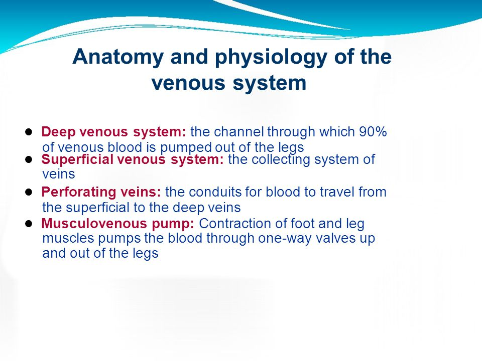 Anatomy and physiology of the venous system