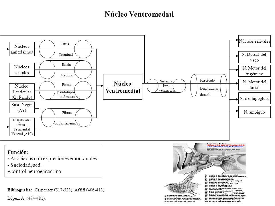 Núcleo Ventromedial Ventromedial Función: