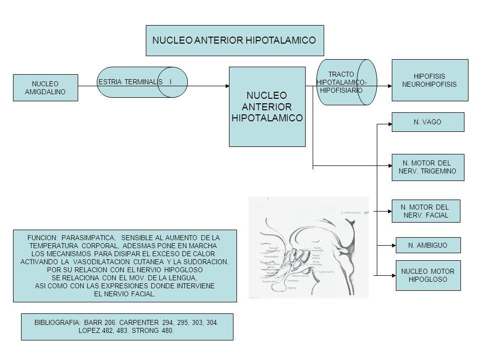 NUCLEO ANTERIOR HIPOTALAMICO