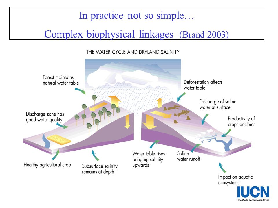 In practice not so simple… Complex biophysical linkages (Brand 2003)