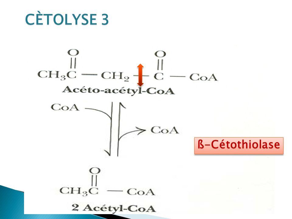 CÈTOLYSE 3 ß-Cétothiolase