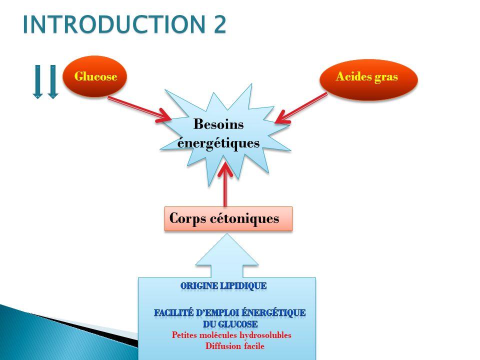 INTRODUCTION 2 Besoins énergétiques Corps cétoniques Glucose