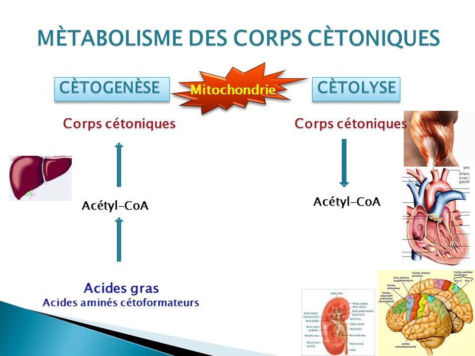 Acides aminés cétoformateurs