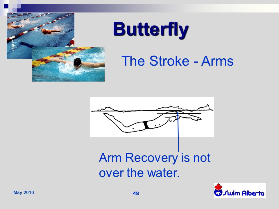 Butterfly The Stroke - Arms Arm Recovery is not over the water.