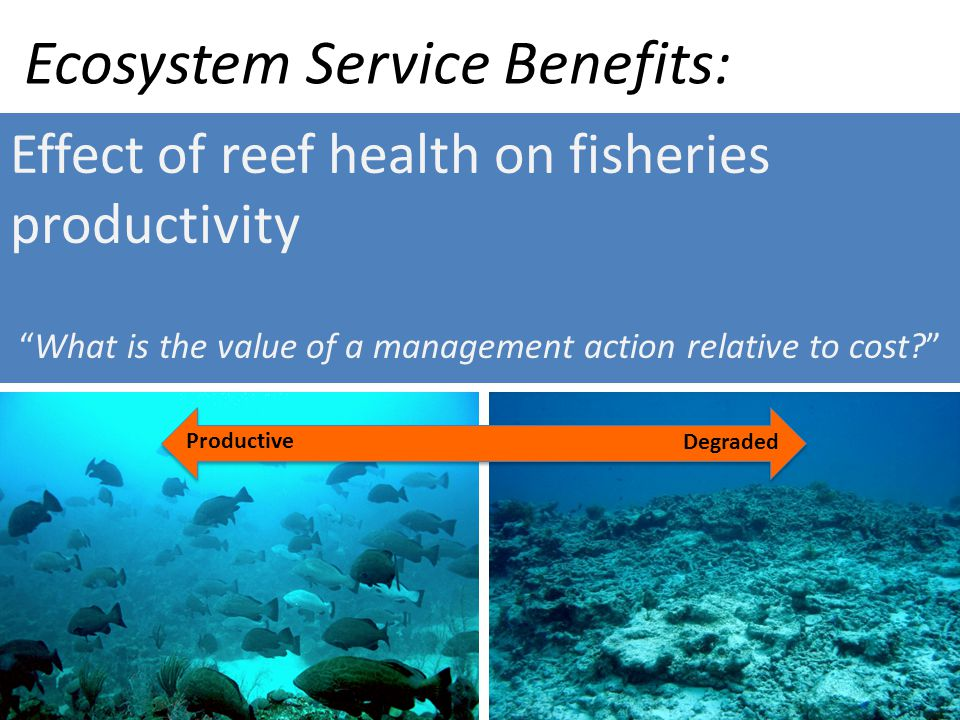 What is the value of a management action relative to cost