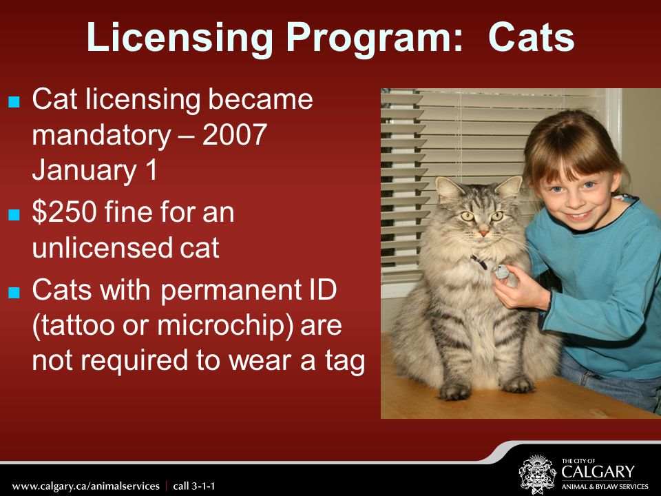 Licensing Program: Cats