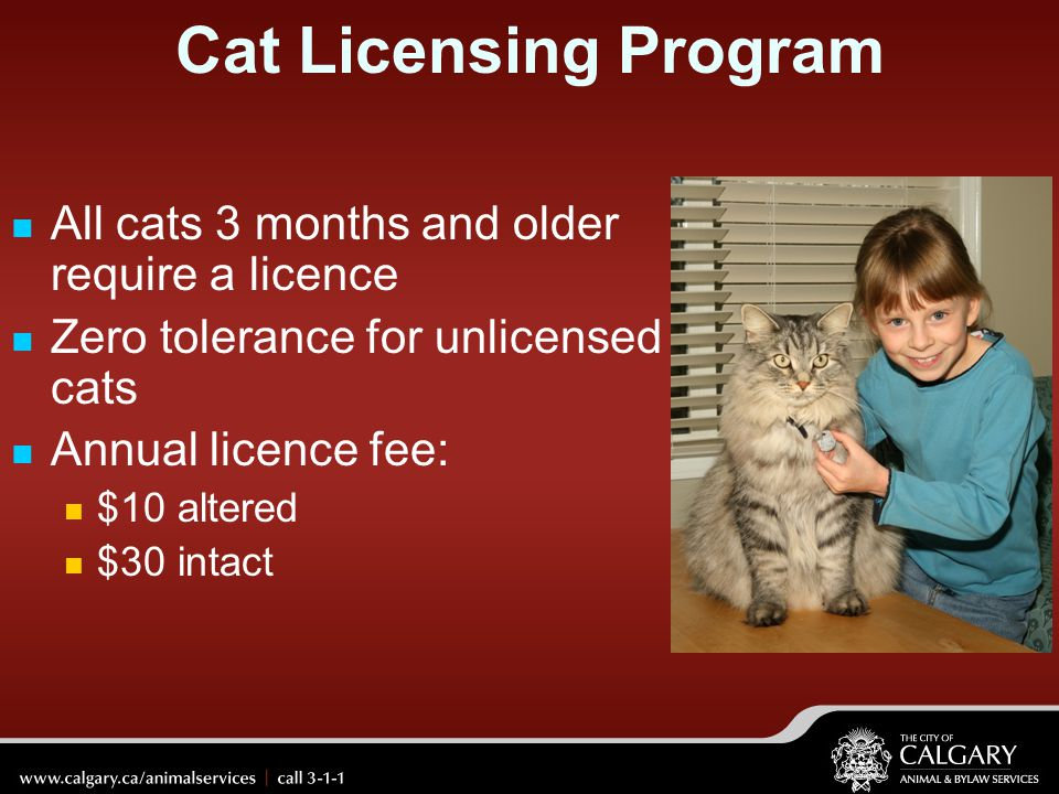 Cat Licensing Program All cats 3 months and older require a licence