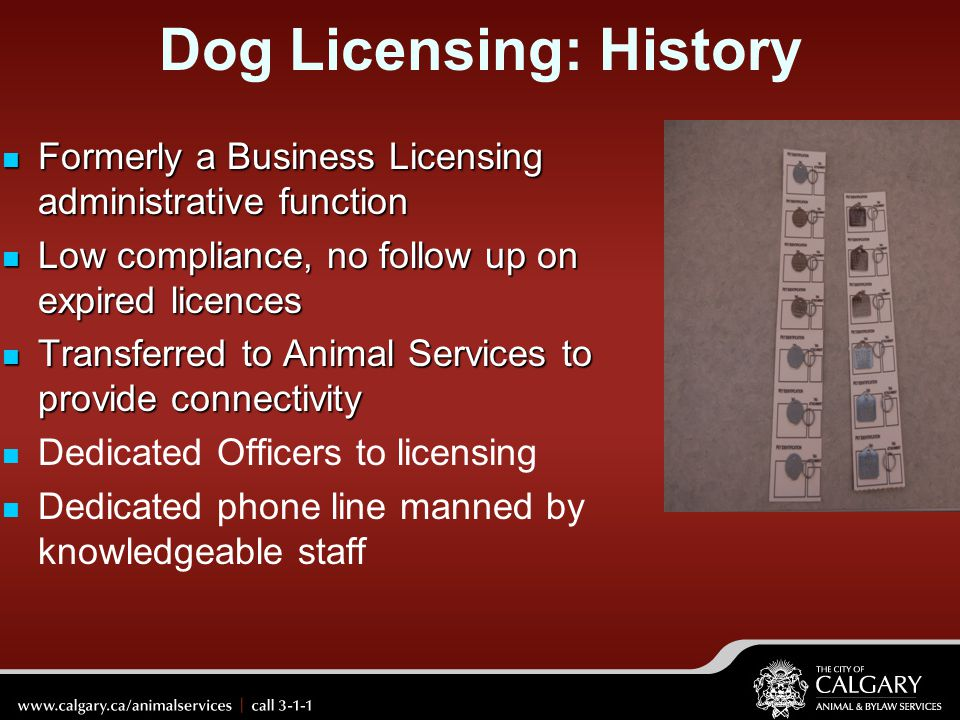 Dog Licensing: History