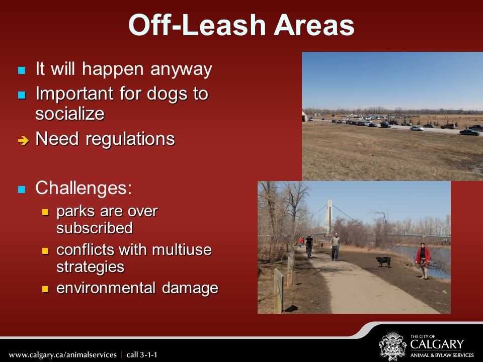 Off-Leash Areas It will happen anyway Important for dogs to socialize